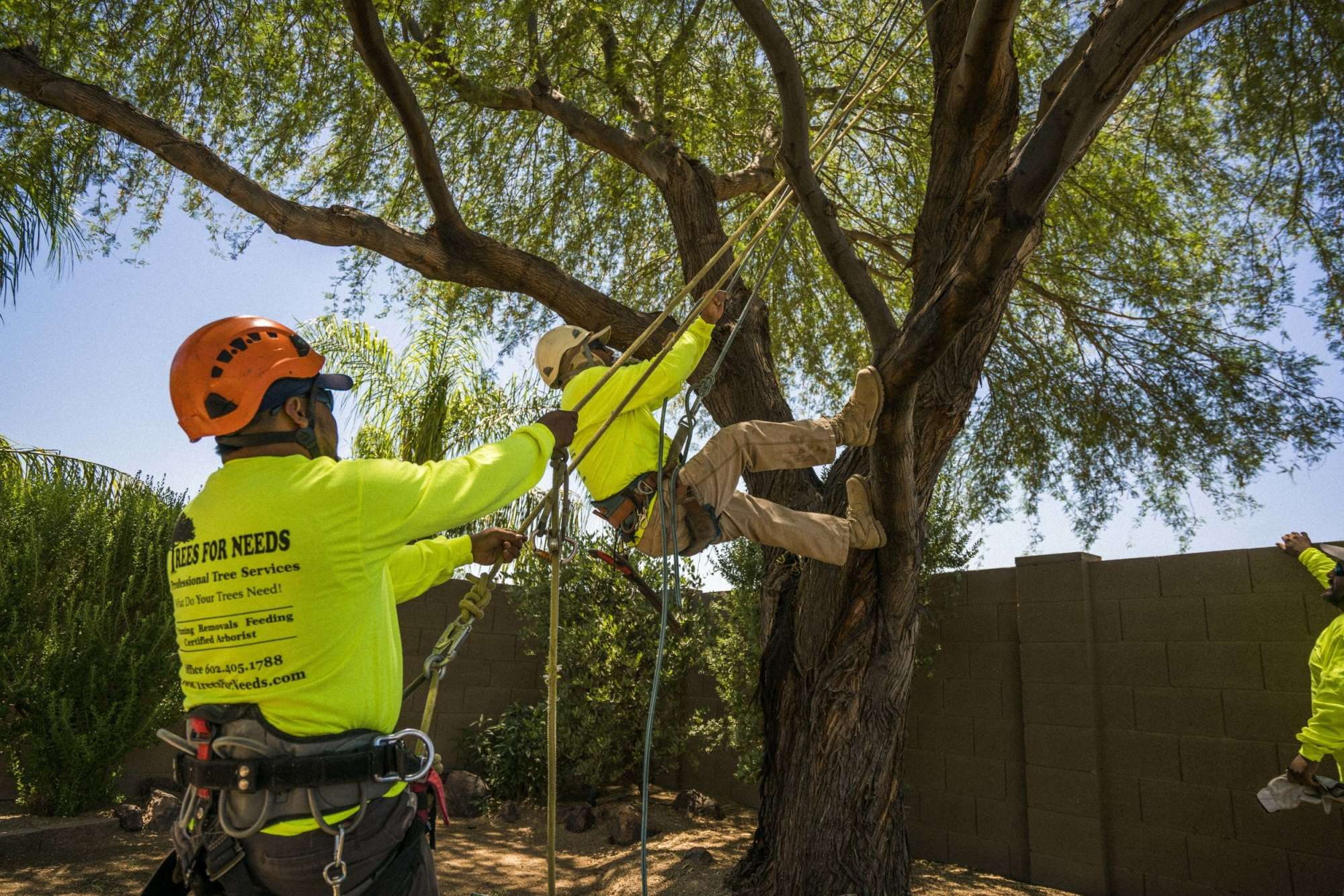 Chula Vista CA Tree Trimming and Stump Grinding Services Home Page Image-We Offer Tree Trimming Services, Tree Removal, Tree Pruning, Tree Cutting, Residential and Commercial Tree Trimming Services, Storm Damage, Emergency Tree Removal, Land Clearing, Tree Companies, Tree Care Service, Stump Grinding, and we're the Best Tree Trimming Company Near You Guaranteed!