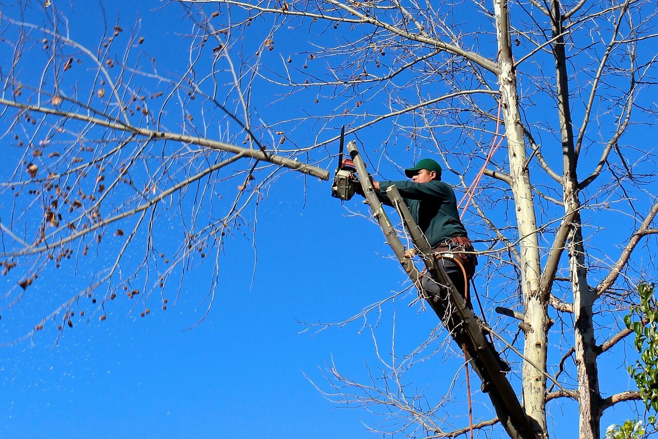 Contact Us-Chula Vista CA Tree Trimming and Stump Grinding Services-We Offer Tree Trimming Services, Tree Removal, Tree Pruning, Tree Cutting, Residential and Commercial Tree Trimming Services, Storm Damage, Emergency Tree Removal, Land Clearing, Tree Companies, Tree Care Service, Stump Grinding, and we're the Best Tree Trimming Company Near You Guaranteed!