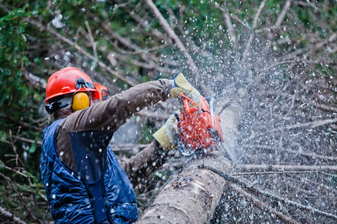 National City-Chula Vista CA Tree Trimming and Stump Grinding Services-We Offer Tree Trimming Services, Tree Removal, Tree Pruning, Tree Cutting, Residential and Commercial Tree Trimming Services, Storm Damage, Emergency Tree Removal, Land Clearing, Tree Companies, Tree Care Service, Stump Grinding, and we're the Best Tree Trimming Company Near You Guaranteed!