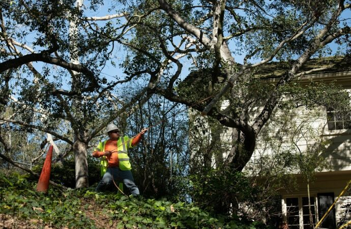 Ocean View Hills-Chula Vista CA Tree Trimming and Stump Grinding Services-We Offer Tree Trimming Services, Tree Removal, Tree Pruning, Tree Cutting, Residential and Commercial Tree Trimming Services, Storm Damage, Emergency Tree Removal, Land Clearing, Tree Companies, Tree Care Service, Stump Grinding, and we're the Best Tree Trimming Company Near You Guaranteed!