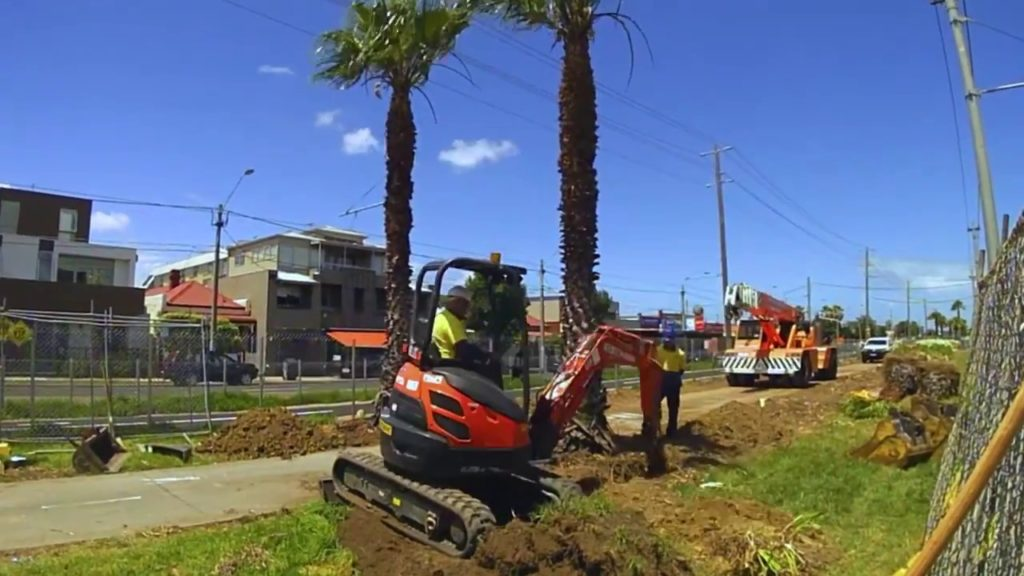 Palm Tree Removal-Chula Vista CA Tree Trimming and Stump Grinding Services-We Offer Tree Trimming Services, Tree Removal, Tree Pruning, Tree Cutting, Residential and Commercial Tree Trimming Services, Storm Damage, Emergency Tree Removal, Land Clearing, Tree Companies, Tree Care Service, Stump Grinding, and we're the Best Tree Trimming Company Near You Guaranteed!