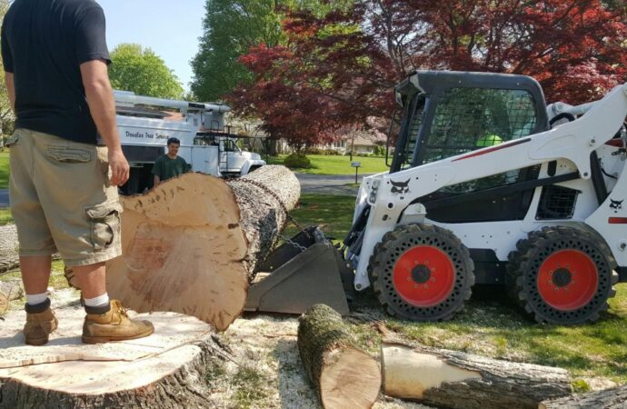 Paradise Hills-Chula Vista CA Tree Trimming and Stump Grinding Services-We Offer Tree Trimming Services, Tree Removal, Tree Pruning, Tree Cutting, Residential and Commercial Tree Trimming Services, Storm Damage, Emergency Tree Removal, Land Clearing, Tree Companies, Tree Care Service, Stump Grinding, and we're the Best Tree Trimming Company Near You Guaranteed!