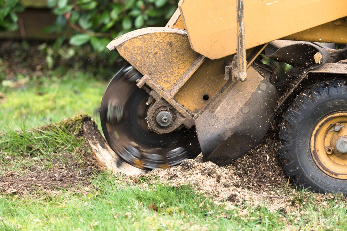 Stump Grinding-Chula Vista CA Tree Trimming and Stump Grinding Services-We Offer Tree Trimming Services, Tree Removal, Tree Pruning, Tree Cutting, Residential and Commercial Tree Trimming Services, Storm Damage, Emergency Tree Removal, Land Clearing, Tree Companies, Tree Care Service, Stump Grinding, and we're the Best Tree Trimming Company Near You Guaranteed!