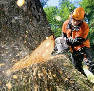 Tree Cutting-Chula Vista CA Tree Trimming and Stump Grinding Services-We Offer Tree Trimming Services, Tree Removal, Tree Pruning, Tree Cutting, Residential and Commercial Tree Trimming Services, Storm Damage, Emergency Tree Removal, Land Clearing, Tree Companies, Tree Care Service, Stump Grinding, and we're the Best Tree Trimming Company Near You Guaranteed!