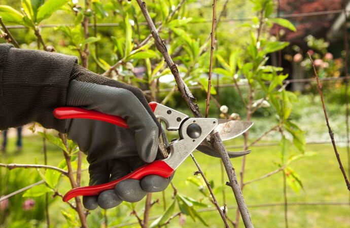 Tree Pruning-Chula Vista CA Tree Trimming and Stump Grinding Services-We Offer Tree Trimming Services, Tree Removal, Tree Pruning, Tree Cutting, Residential and Commercial Tree Trimming Services, Storm Damage, Emergency Tree Removal, Land Clearing, Tree Companies, Tree Care Service, Stump Grinding, and we're the Best Tree Trimming Company Near You Guaranteed!